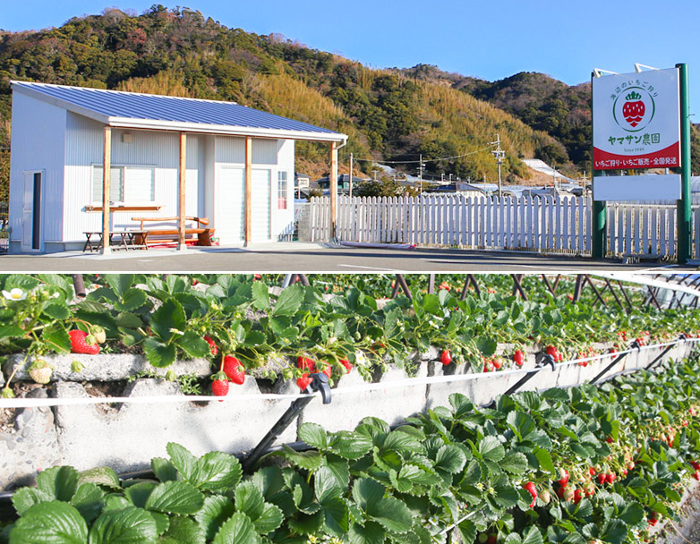 ヤマサン農園